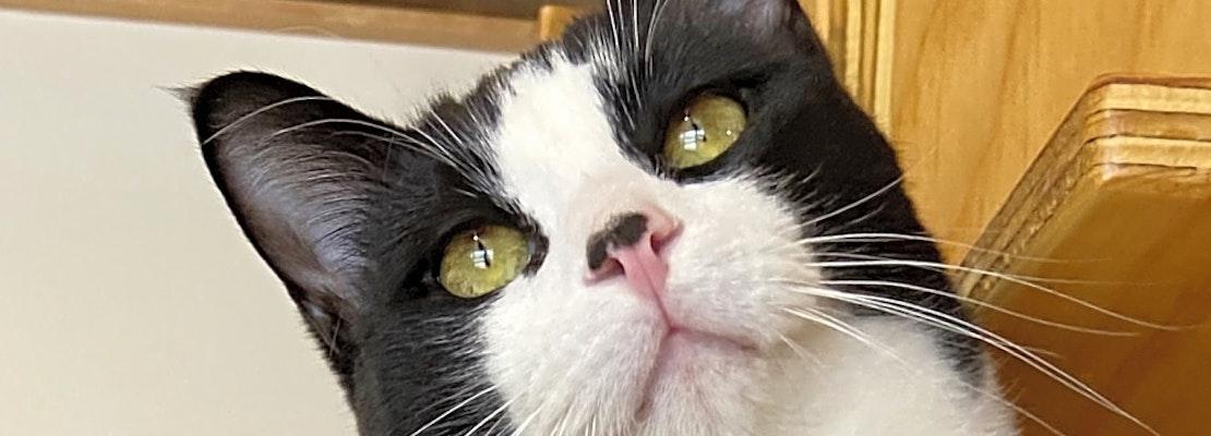 7 cool kitties to adopt now in Colorado Springs