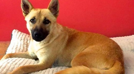 Want to adopt a pet? Here are 7 cuddly canines available now in San Diego