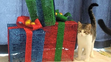 7 furry felines to adopt now in Portland