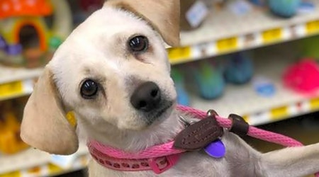 Looking to adopt a pet? Here are 7 cuddly canines to adopt now in Fresno