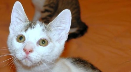 5 fluffy felines to adopt now in Philadelphia