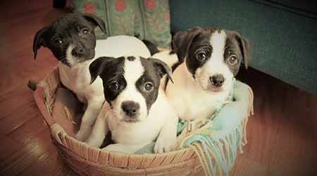4 perfect pups to adopt now in Detroit