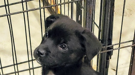 Looking to adopt a pet? Here are 7 adorable pups to adopt now in Chicago