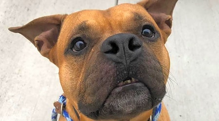 Want to adopt a pet? Here are 7 lovable pups to adopt now in Cleveland