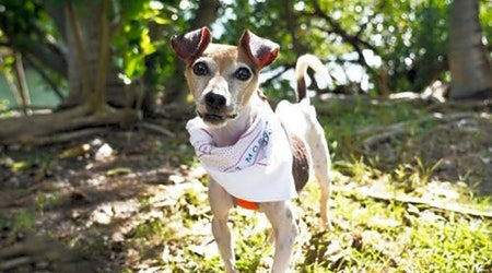 These Miami-based doggies are up for adoption and in need of a good home