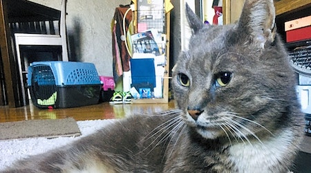 These Jersey City-based cats are up for adoption and in need of a good home