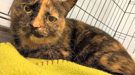 These Cleveland-based felines are up for adoption and in need of a good home