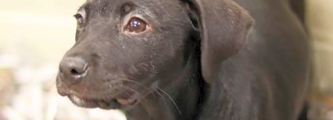 Want to adopt a pet? Here are 4 perfect puppies to adopt now in Atlanta