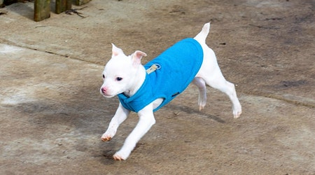 These Indianapolis-based puppies are up for adoption and in need of a good home