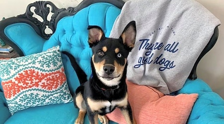 3 adorable pups to adopt now in Chicago