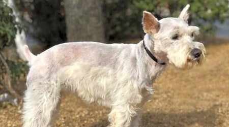 Looking to adopt a pet? Here are 7 cuddly canines to adopt now in Austin