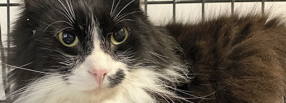 These Portland-based cats are up for adoption and in need of a good home