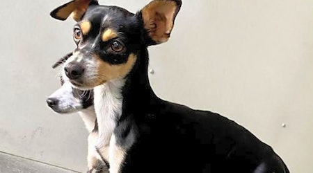 Looking to adopt a pet? Here are 7 lovable pups to adopt now in Seattle