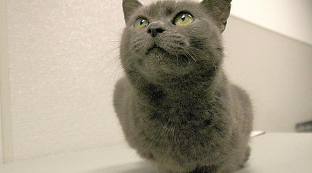 7 charming cats to adopt now in Washington