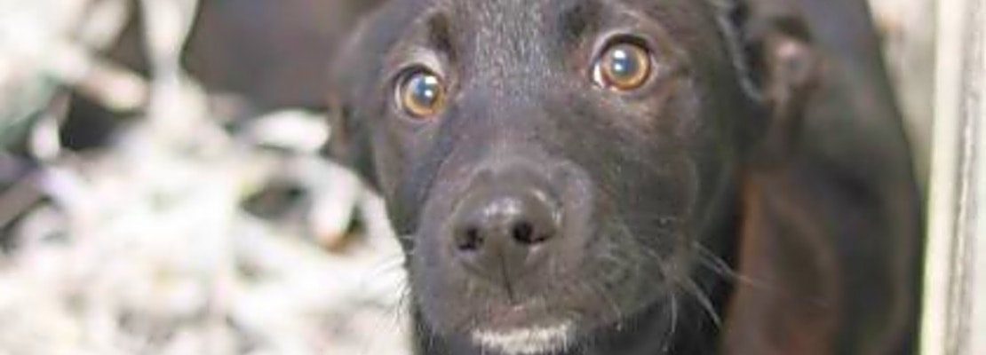 These Atlanta-based puppies are up for adoption and in need of a good home