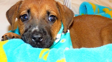 3 adorable pups to adopt now in Jacksonville