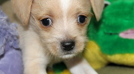Want to adopt a pet? Here are 6 cuddly canines to adopt now in Miami