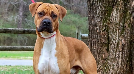 Looking to adopt a pet? Here are 7 cuddly canines to adopt now in Nashville