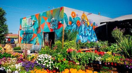 Phoenix's top 4 plant nurseries, ranked