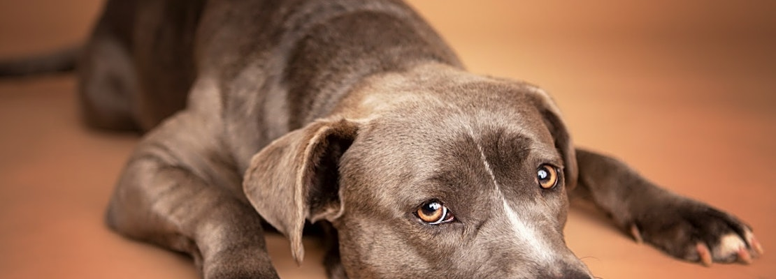 Looking to adopt a pet? Here are 6 delightful doggies to adopt now in Houston