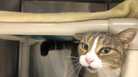 6 charming cats to adopt now in Jersey City