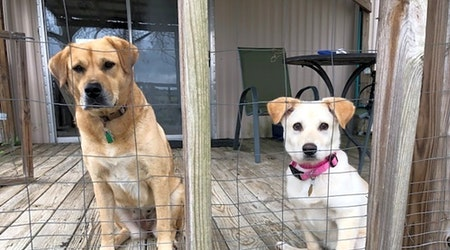 7 perfect puppies to adopt now in Atlanta