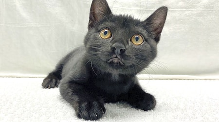 These Miami-based kittens are up for adoption and in need of a good home
