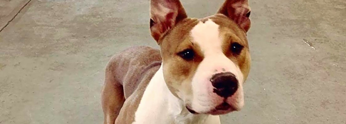 6 cuddly canines to adopt now in Indianapolis