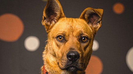 3 cuddly canines to adopt now in Portland