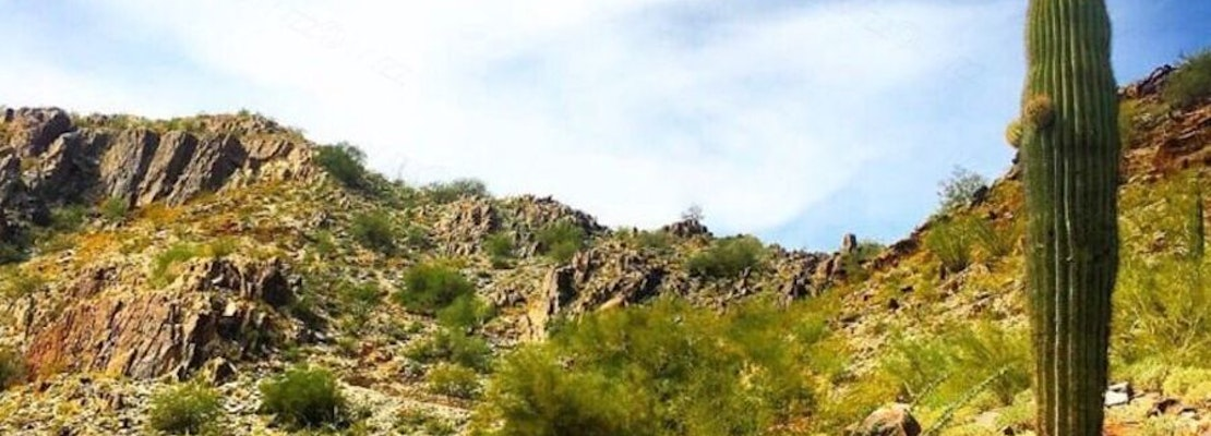 Phoenix's top 4 parks to visit now