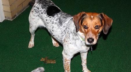 6 delightful doggies to adopt now in Philadelphia