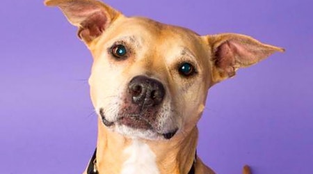 These Pittsburgh-based dogs are up for adoption and in need of a good home
