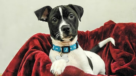 These Detroit-based puppies are up for adoption and in need of a good home