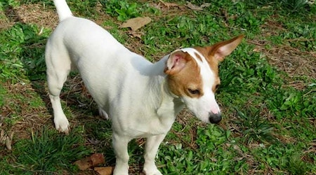 5 lovable pups to adopt now in Charlotte