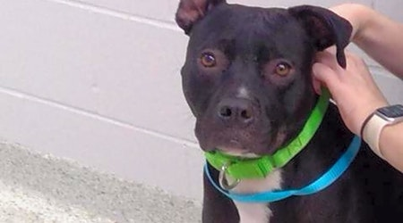 Want to adopt a pet? Here are 3 delightful doggies to adopt now in Jacksonville