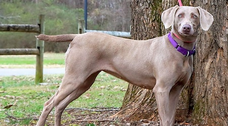 7 lovable pups to adopt now in Nashville