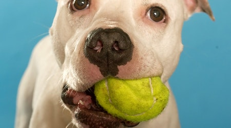 7 lovable pups to adopt now in Chicago