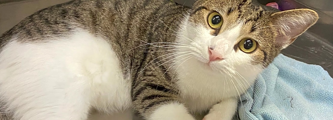 These San Antonio-based cats are up for adoption and in need of a good home