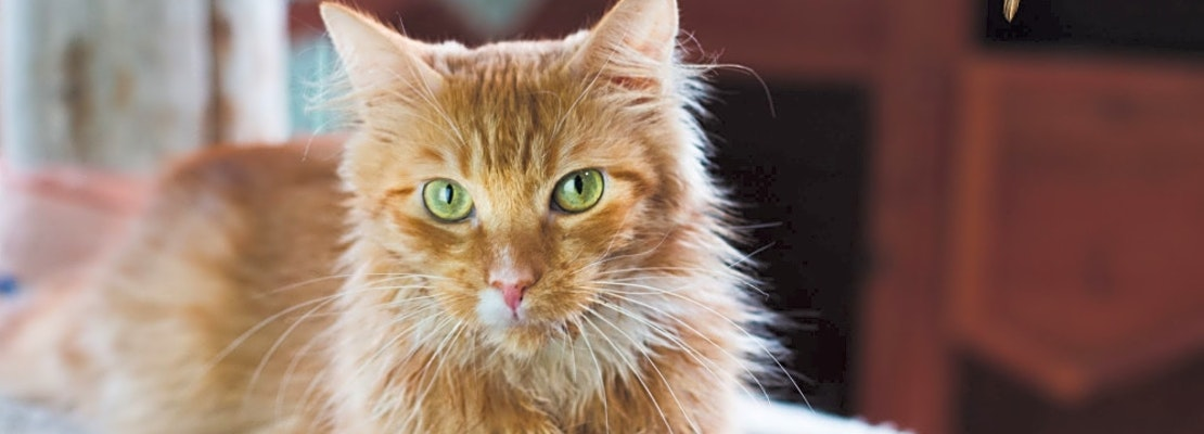 These Seattle-based cats are up for adoption and in need of a good home