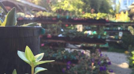 Meet Hortica, The Castro's Full-Service Nursery And Garden Shop