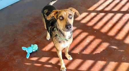 These San Antonio-based dogs are up for adoption and in need of a good home