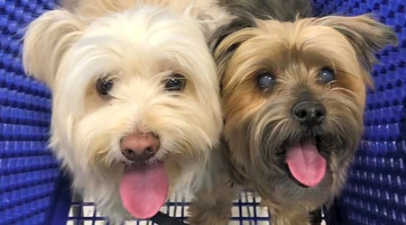 Looking to adopt a pet? Here are 7 delightful doggies to adopt now in Las Vegas