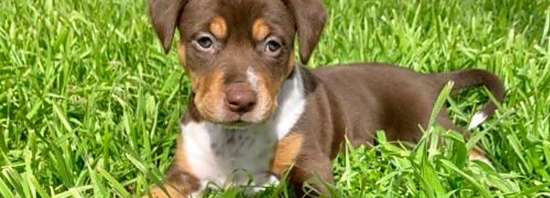 5 precious puppies to adopt now in New York City