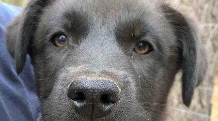 7 cuddly canines to adopt now in Washington