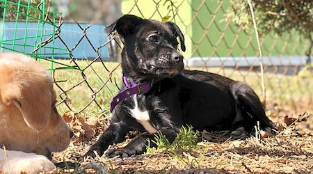 Want to adopt a pet? Here are 5 cuddly canines to adopt now in Baltimore