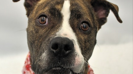 Want to adopt a pet? Here are 5 delightful doggies to adopt now in Detroit