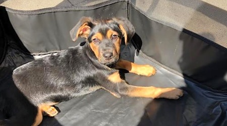 5 perfect pups to adopt now in Charlotte