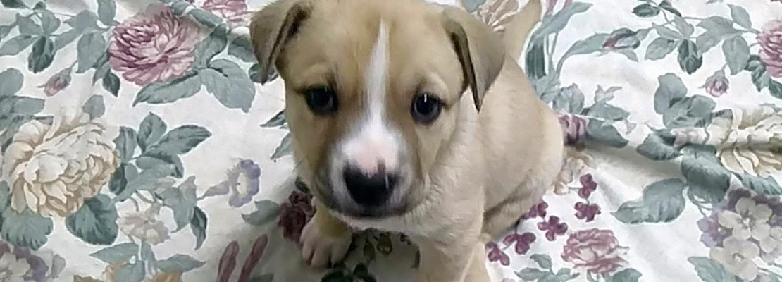 4 cuddly canines to adopt now in Orlando