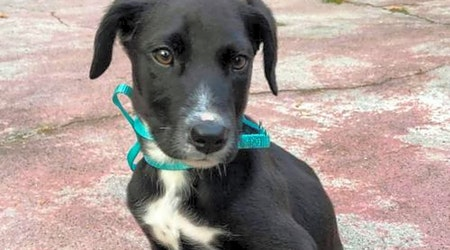 5 cuddly canines to adopt now in Tampa