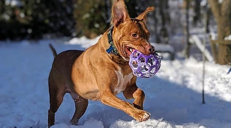 6 delightful doggies to adopt now in Indianapolis